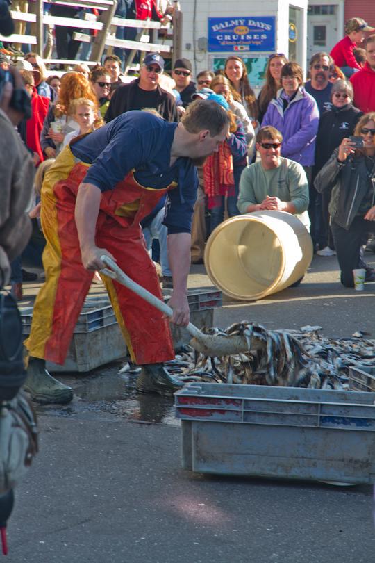 Fishermans Festival 2013 - 2-5